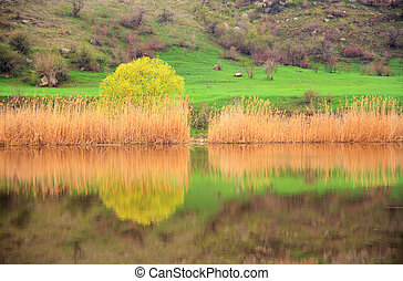 Spring landscape on the river - Spring landscape with yellow...