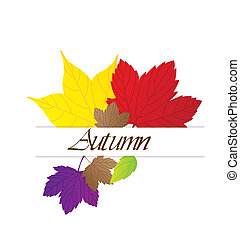 autumn leaves - cute autumn leaves over white background....