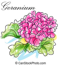Geranium Flower - An image of a pink geranium flower.