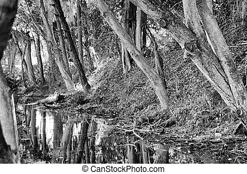 tree lined stream - Black and white image of a tree lined...