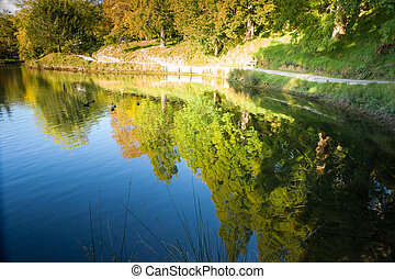 Park reflections. - Park trees and walking track reflected...