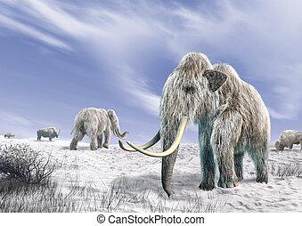dwa, Mamut, pole, pokryty, Śnieg