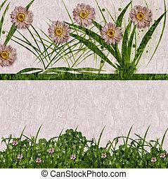 Romantic daisy