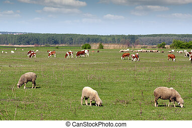 Bauernhof, Weide, tiere
