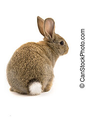 Adorable rabbit isolated on white - Adorable rabbit isolated...