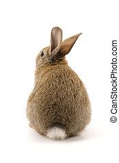 adorable, conejo, aislado, blanco