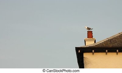 Seagull waiting on roof top, then flying away