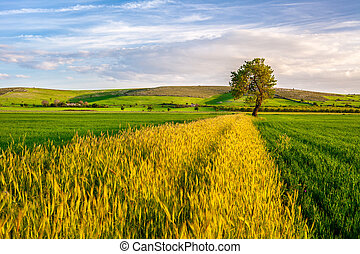 Wheat Field with a Tree