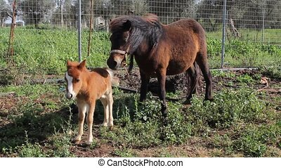 A little pony with his mother