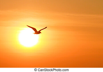 Seagull on sunset background, thailand