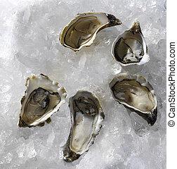 fresh oysters traditional wedding breakfast