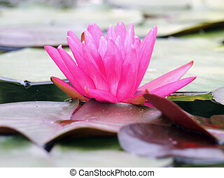 Lotus shoot in the near term