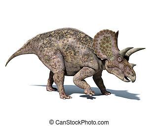Triceratops, dinossauro, isolado, branca, fundo, clippin