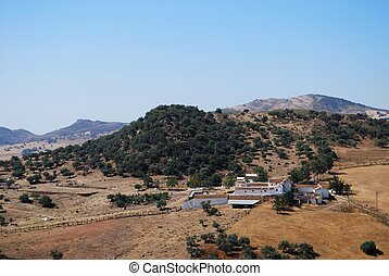 Farm near Almogia, Andalusia. - Farm (Cortijo) amongst wheat...