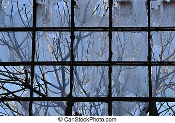 branches and broken factory window - Tree branches and...