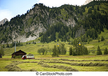 The crop of hay fodder