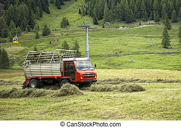 The crop of hay fodder in the mountains