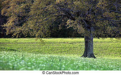 Spring scene - Tree with fresh leaves under evening sun...