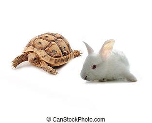 coelhinho, tartaruga, competição, conceito