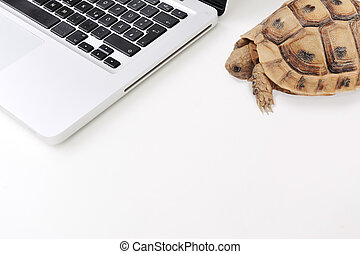 Slow connection and computer as a turtle