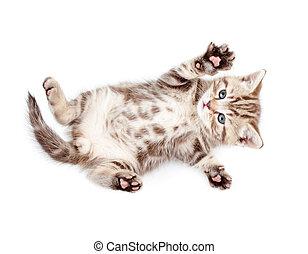 Little baby kitten lying on back