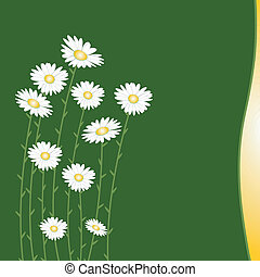 Flower background with daisy