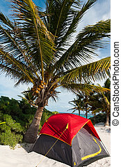 Camping on the Caribbean beach under a palm tree