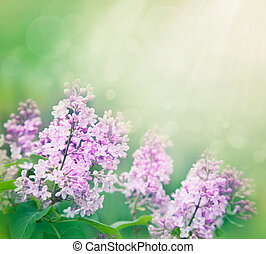 Lilac flowers background - Spring bokeh floral background...