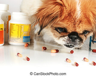 Veterinary care. - Dog and pills. Veterinary care concept.