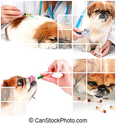 Veterinary care. - Vet and dog. Veterinary care collage.