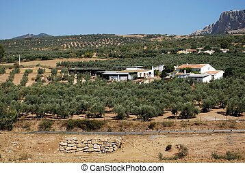 Farm and countryside, Almogia. - Traditional whitewashed...
