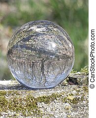 Crystal Ball reflecting trees - Crystal ball reflecting...