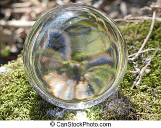 glass ball reflecting nature - Forest reflecting in crystal...