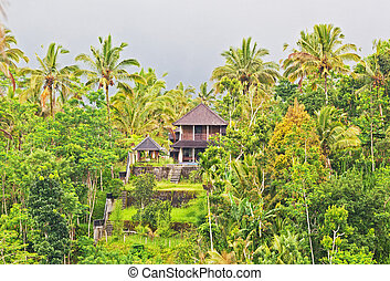 wooden house in the jungle on the island of Bali