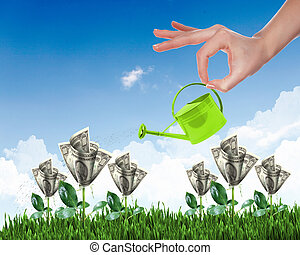 Human hand watering money tree - Human hand with a pot...