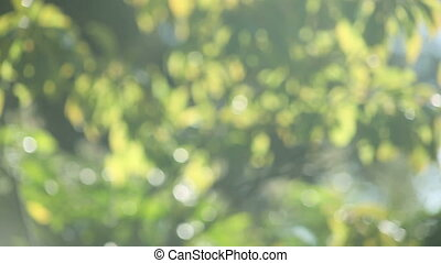 pale green bokeh background - defocused green leaves useful...