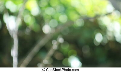 defocused tree background - small tree in soft focus