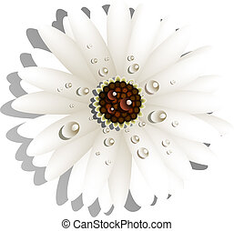 Beautiful White Gerber Daisy with dew drops. EPS 10, AI,...