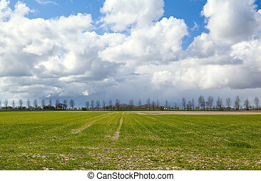 field and beautiful sky with puffy clouds
