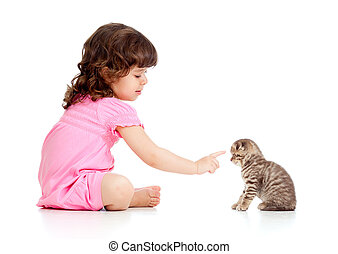 funny child playing and bringing up Scottish kitten - little...