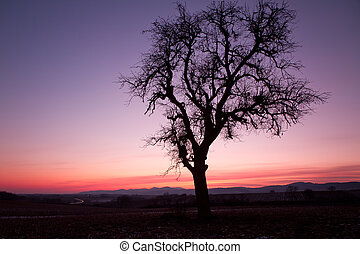 Single tree after sunset with violet skies, Pfalz, Germany