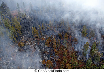 Forest Fire - A pine forest burns and smolders during a fire...