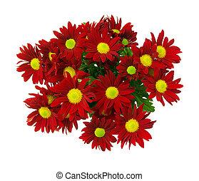 Blüte, Fruehjahr
