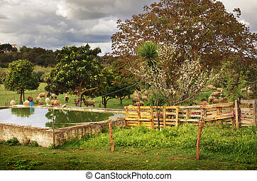 Rural Scene - Rural scene of a green yard with trees and...