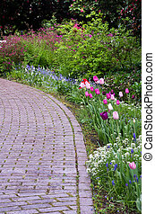 Garden path with tulips blooming