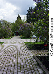 Paved garden walkway with trees