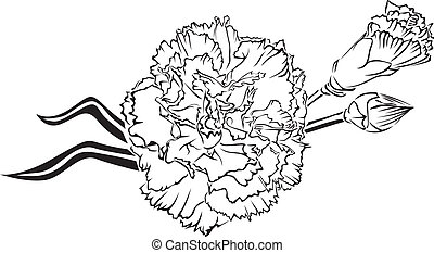 carnation - The contour image of beautiful bouquet of...