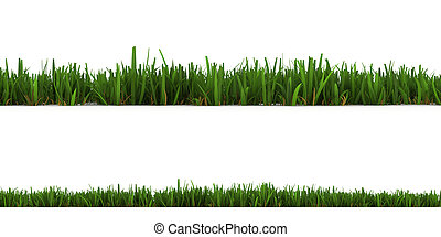 grass isolated   - grass isolated on the white background
