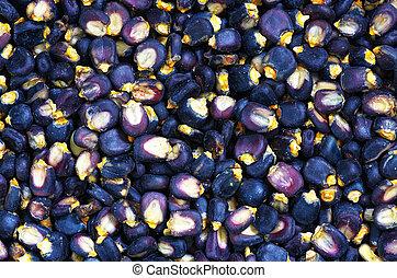 azul, maíz,  posole