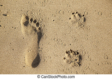 footsteps  of a dog and a man at the beach